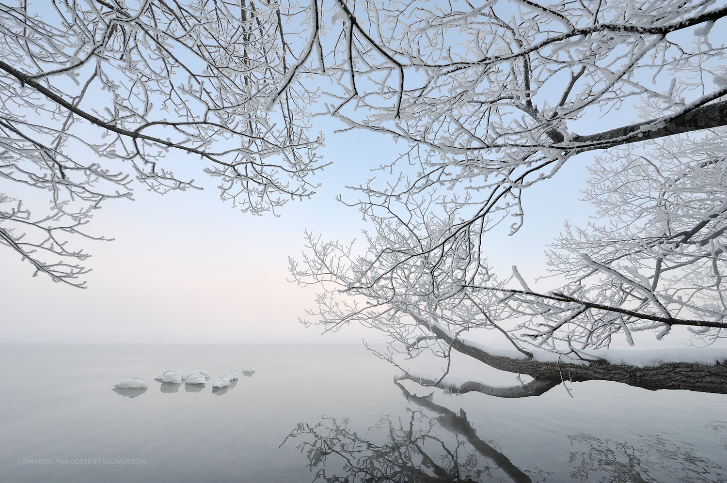 White Silence by Marsel van Oosten