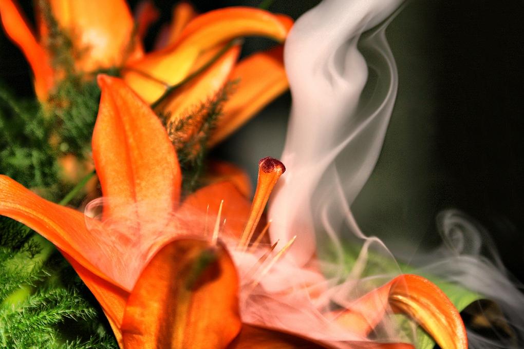Smokin' by Konstantin Dimitrov