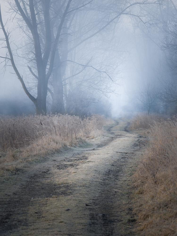 on the swamp by Krzysztof Mikulski