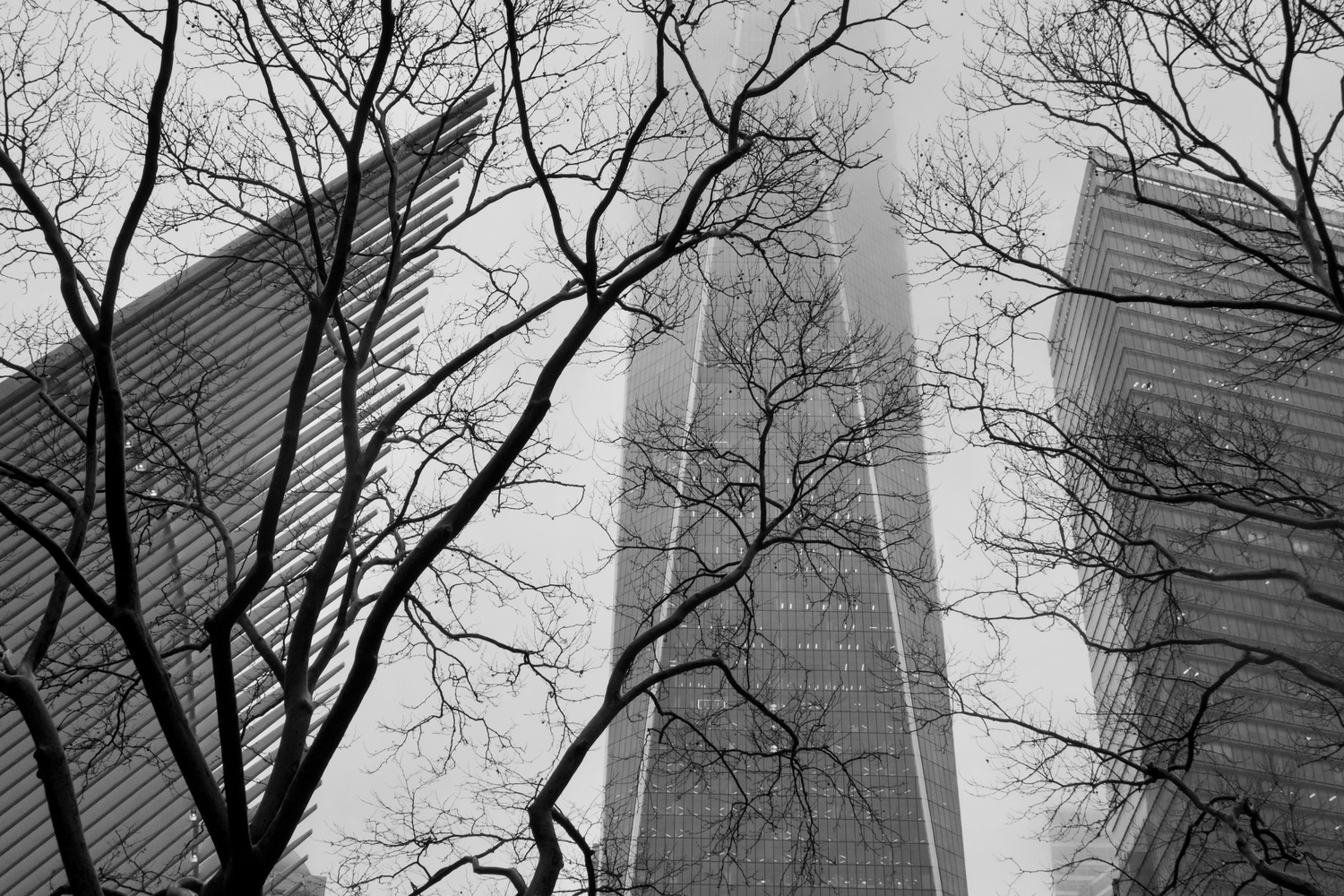 Freedom Tower With Trees by Eliza McNally