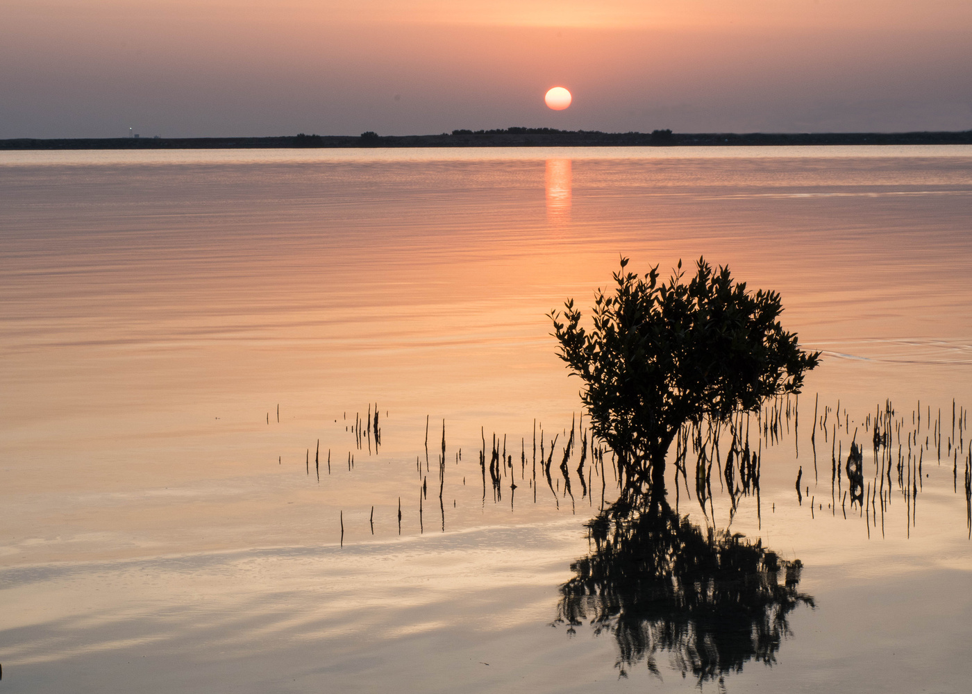 Sunrise at Mirfa by Ron Cunningham