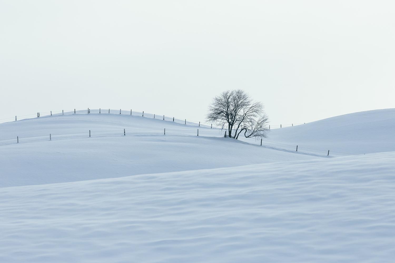 Layers of Winter by Branislav Rohal