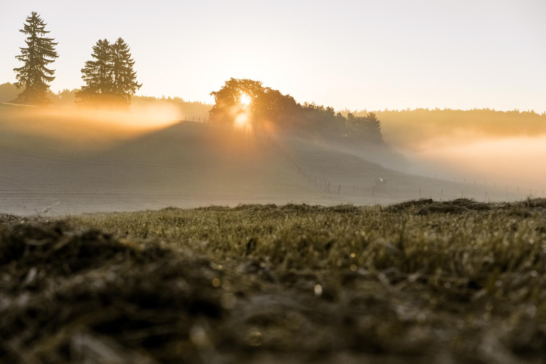 Harvest sunrise by felicitas hoamatgfui