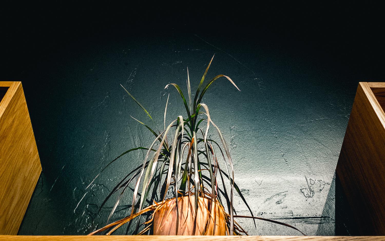 Leaves Lookup by Duane Dinham