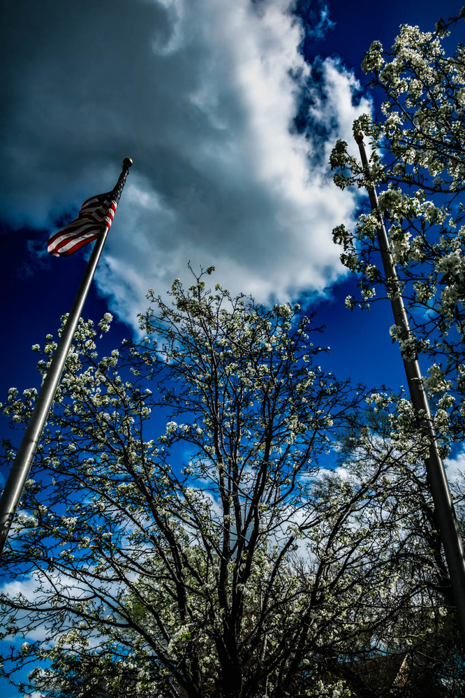 It was a sunny spring day by Duane Dinham