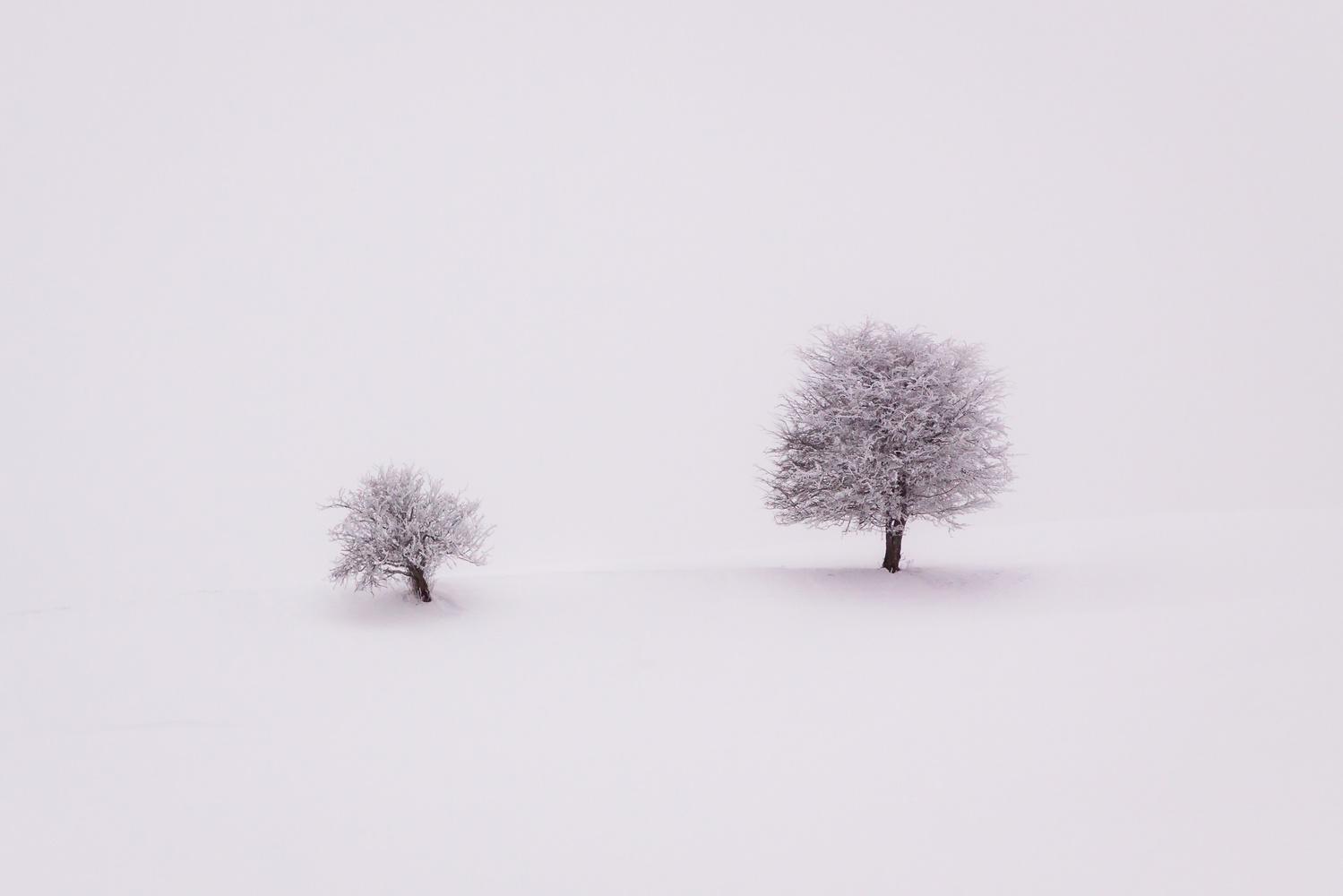 Lonely trees / Füssen, Germany by Jeroen Hribar