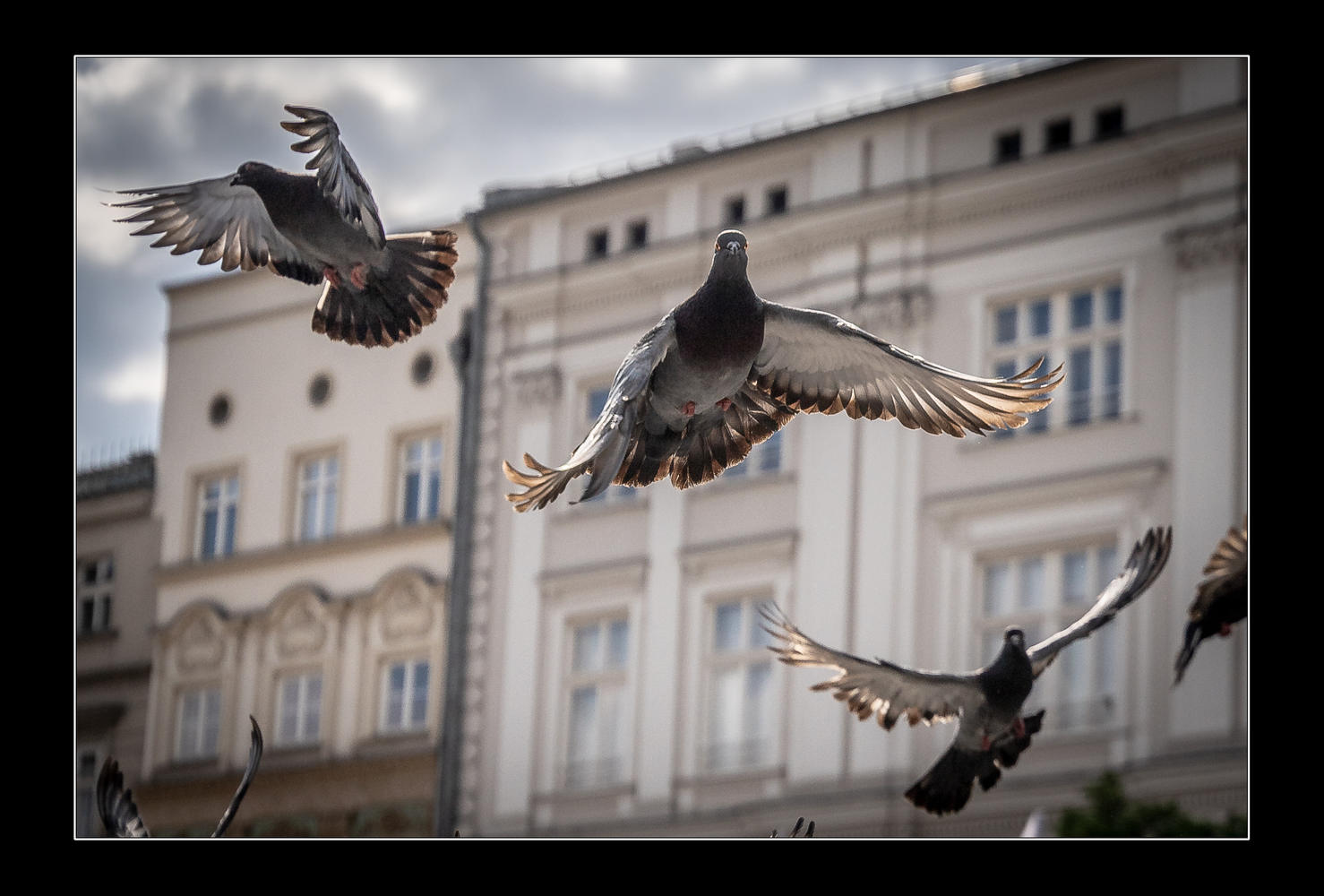 No fly zone by Piotr Pogonowski