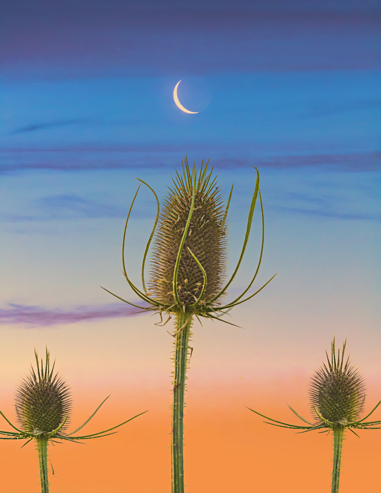 Composite Buds by Cliff Mueller