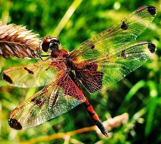 Dragonfly by Cindy Lawson DeVore