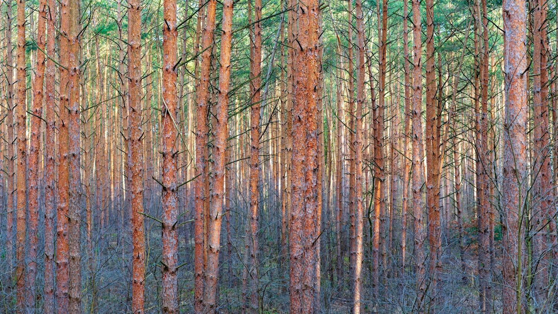 Colorful woodland by Mo Moghaddas
