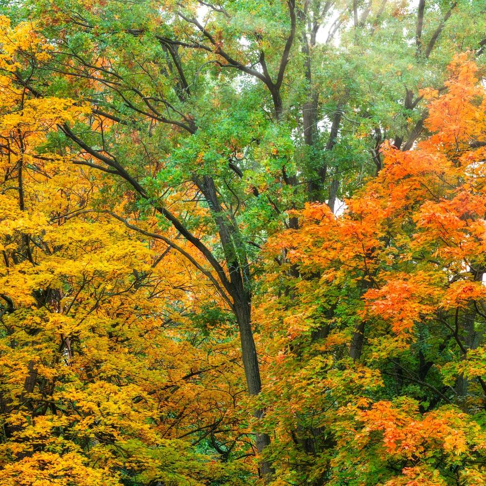 Colorful Fall by Mo Moghaddas