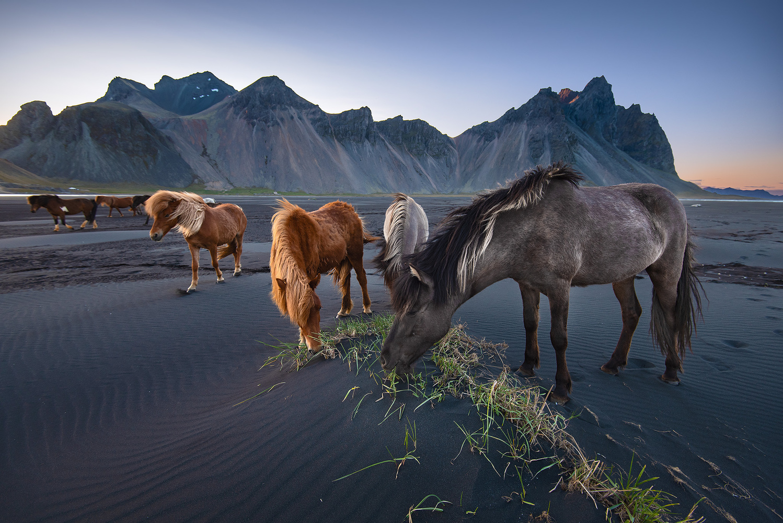 Wild Spirits by Donald Yip