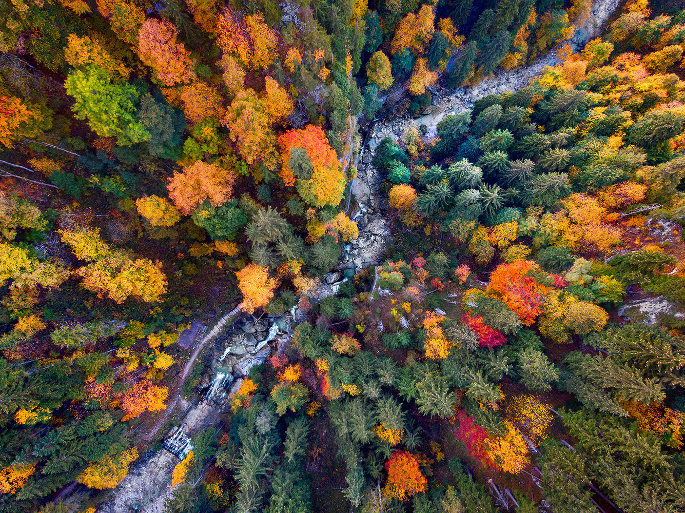 Bavarian Fall by Donald Yip