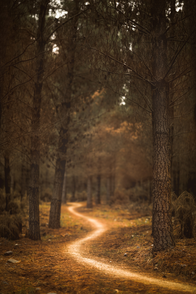 Into the woods by Dakota Brown