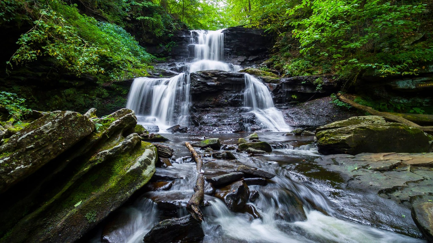 Rickets Glen by Greg Milunich
