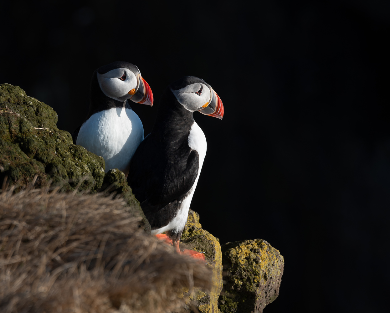 Puffin Couple by Henrik Forsting