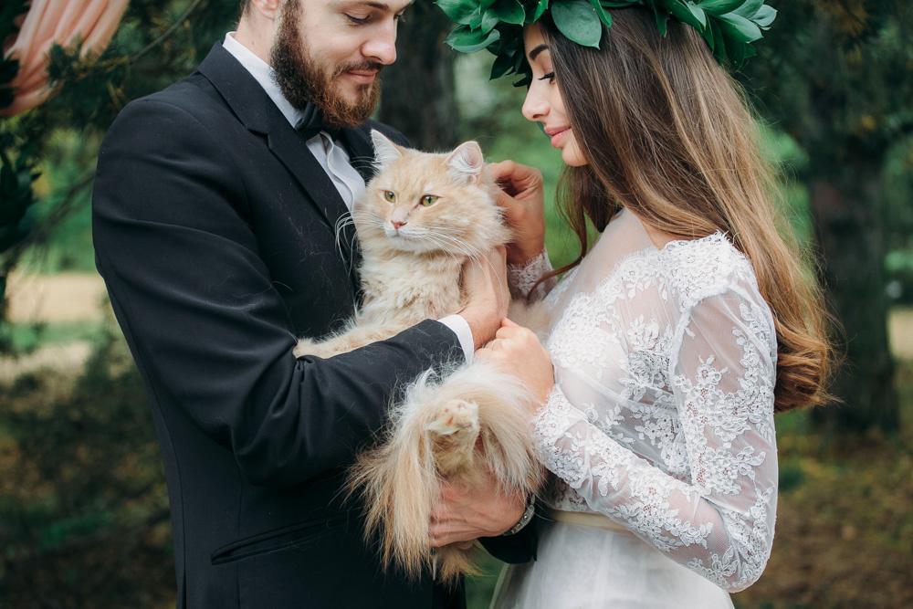 Cat at the wedding by Dmitry Pavlov