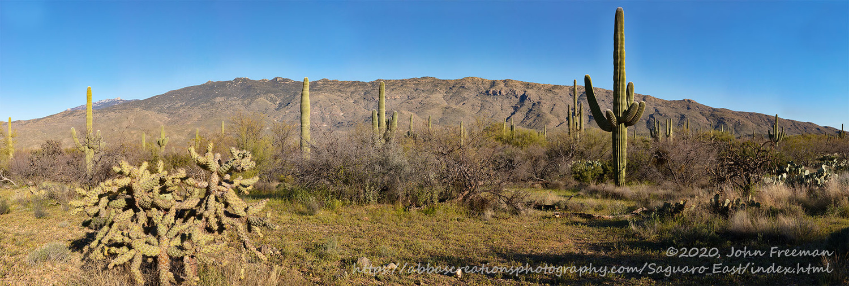 Saguaro East by John Freeman