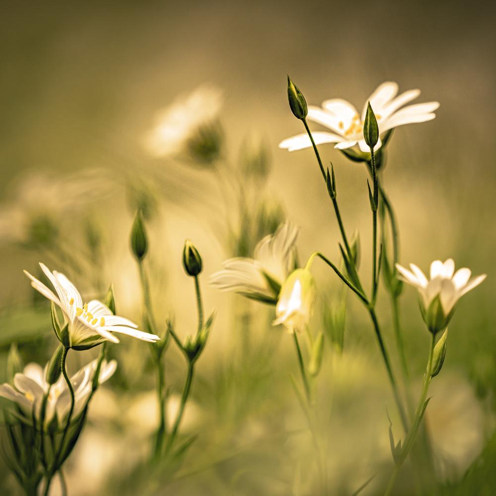Wildflower by Matthias Dietrich