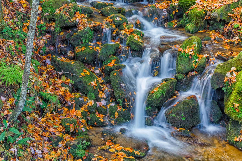 Autumn Falls by Richard Higgins