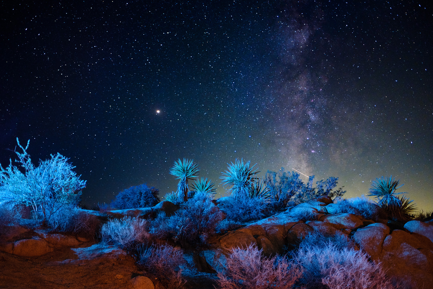 Joshua Tree in blue by Colin Robertson