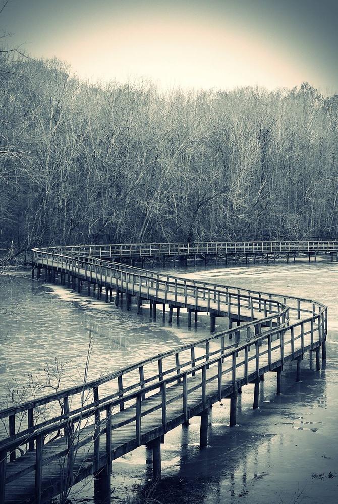 A Winter Walk by Shawn Thompson