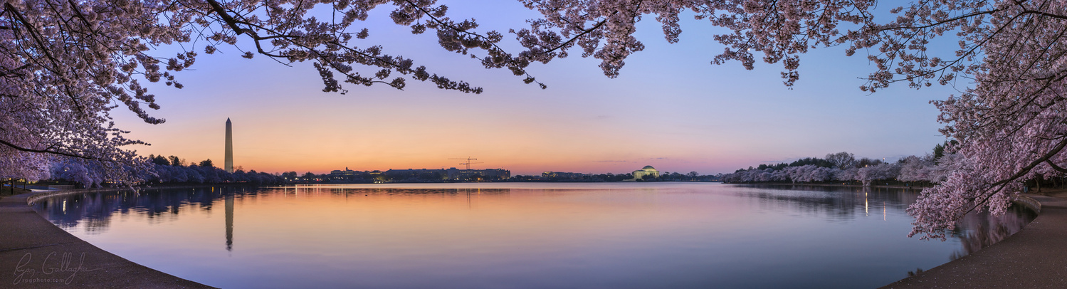 Dusk Cherry Blossoms at the Tidal Basin by Ryan Gallagher