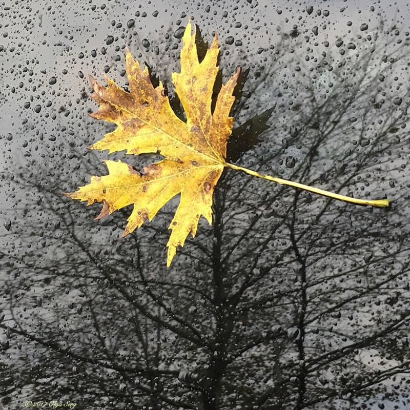 Fall is coming by Olga Sergyeyeva