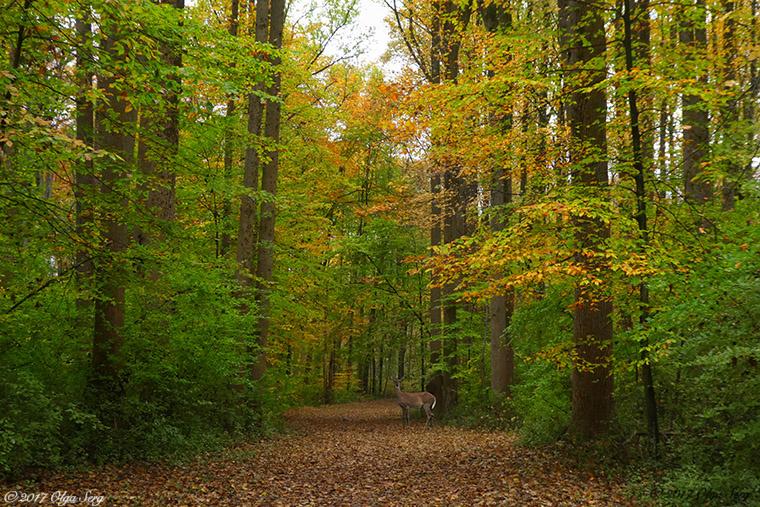 In the Woods by Olga Sergyeyeva