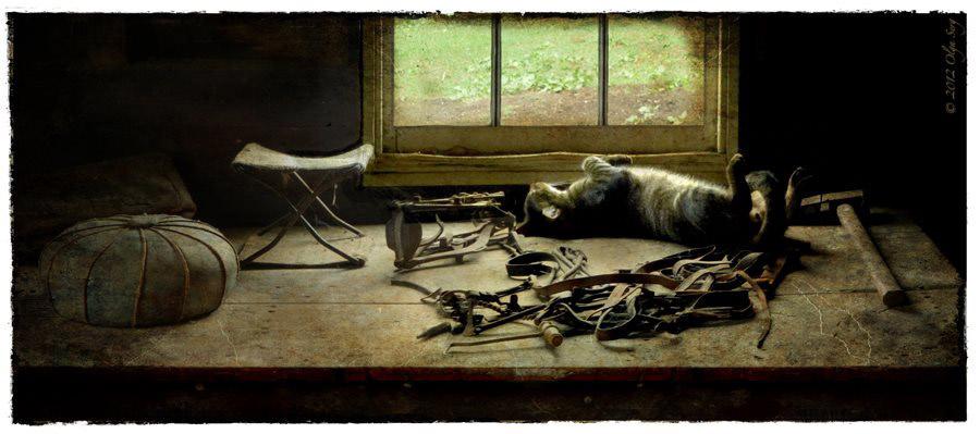 Barn Cat, Longstreet Farm, NJ by Olga Sergyeyeva
