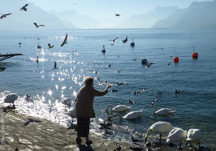 Feeding the Birds by Olga Sergyeyeva