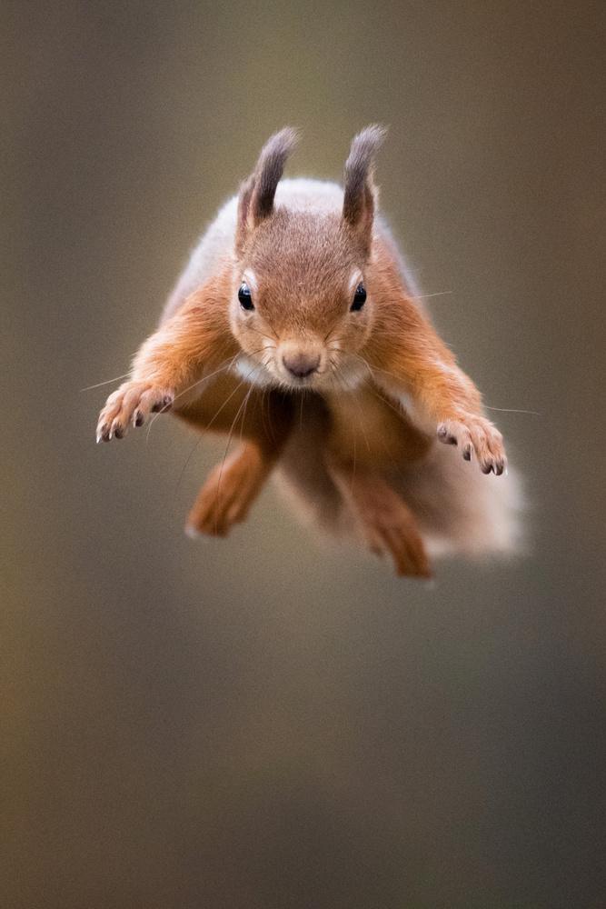Jump! by Samuel Nugues