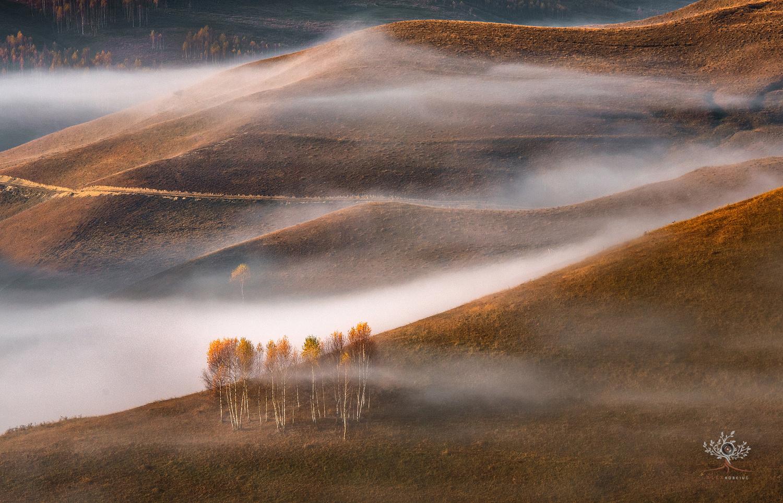 Birch Trees In The Fog by Alex Robciuc