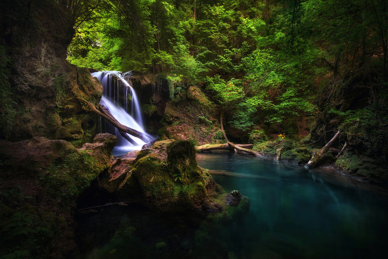 The forest waterfall by Alex Robciuc