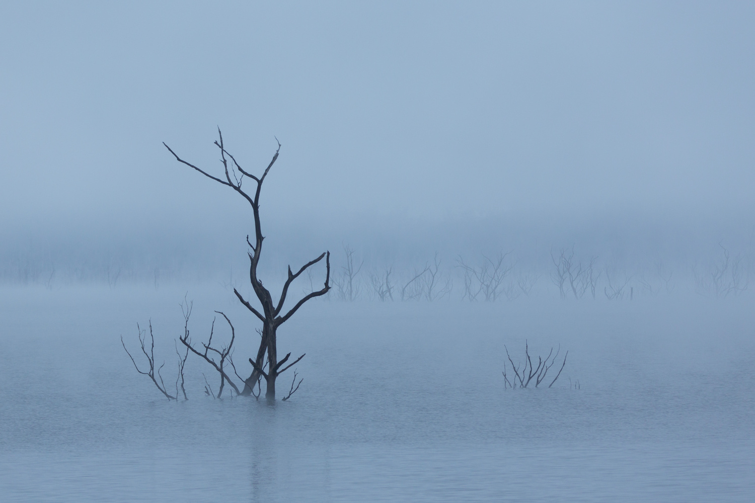 Mysterious Tree by Brad Baker