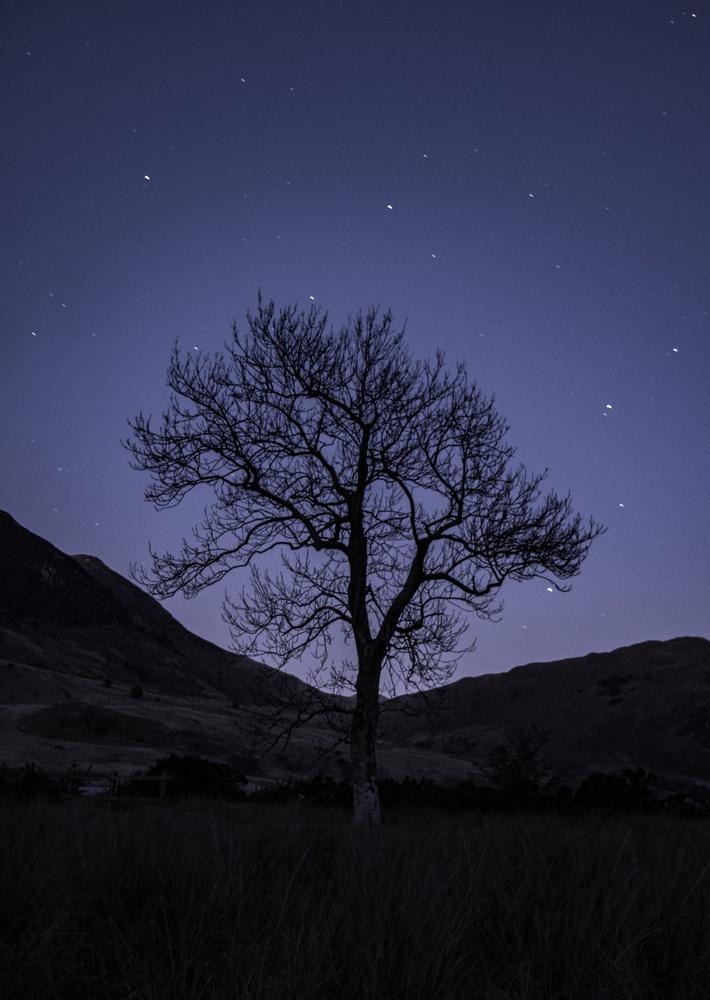 Dark tree by Martin Carrera