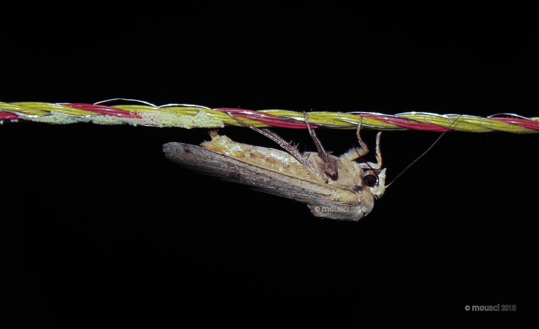 """""""Moth surprise!"""" by Kat Ja"""
