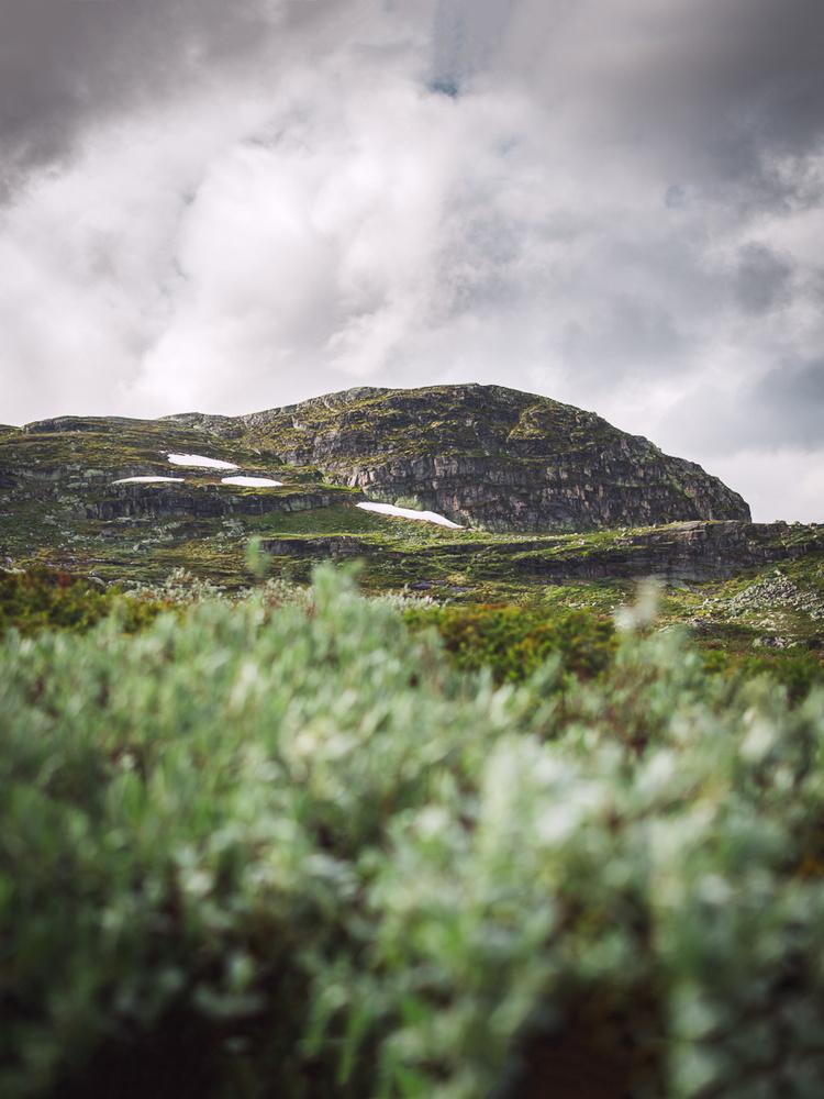 Hardangervidda, Norway 2017 by Jo Collier