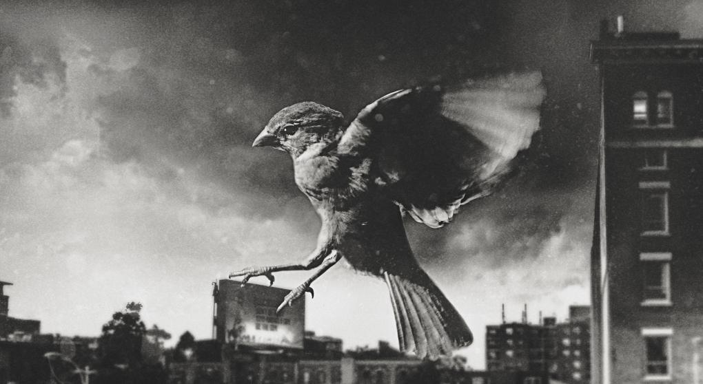 Feather friend by Wyatt Michalek