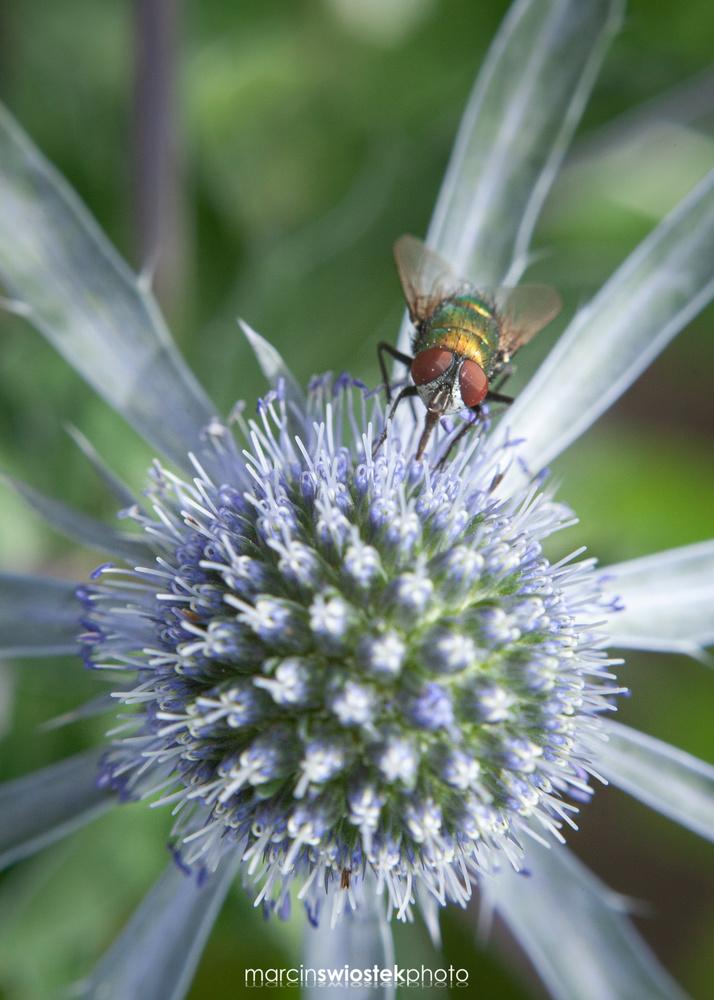 Pollination by Marcin Świostek