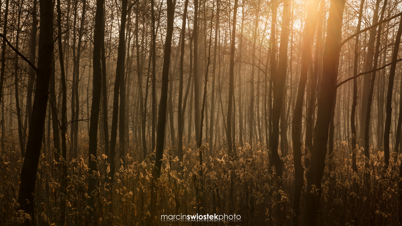 Morning forest by Marcin Świostek