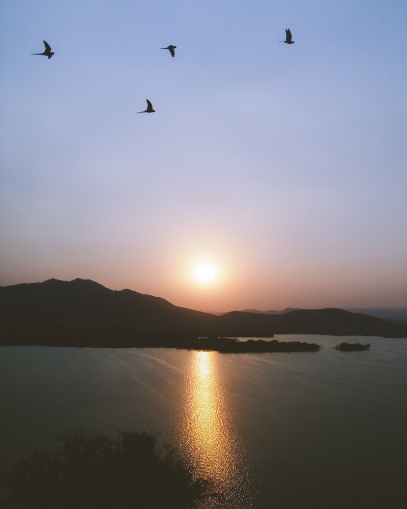 Birds and Sunset by Bhupendra Ranawat