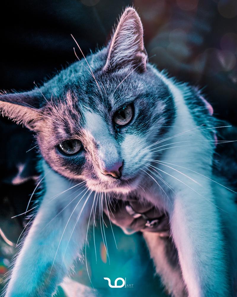 Cat by Dušan Zonji
