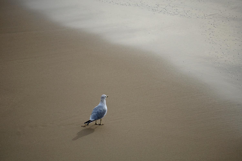 Birdie by Allen Ng