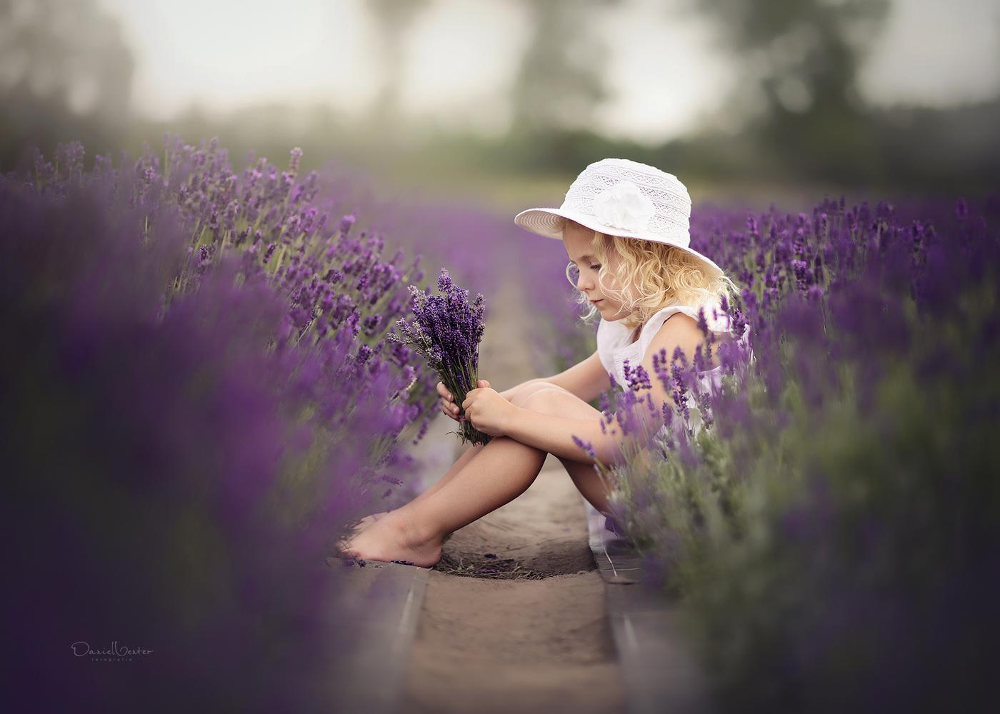 Lavender Dreams by Daniel Venter