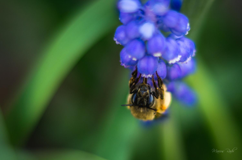 Bee at work by Marius Radu