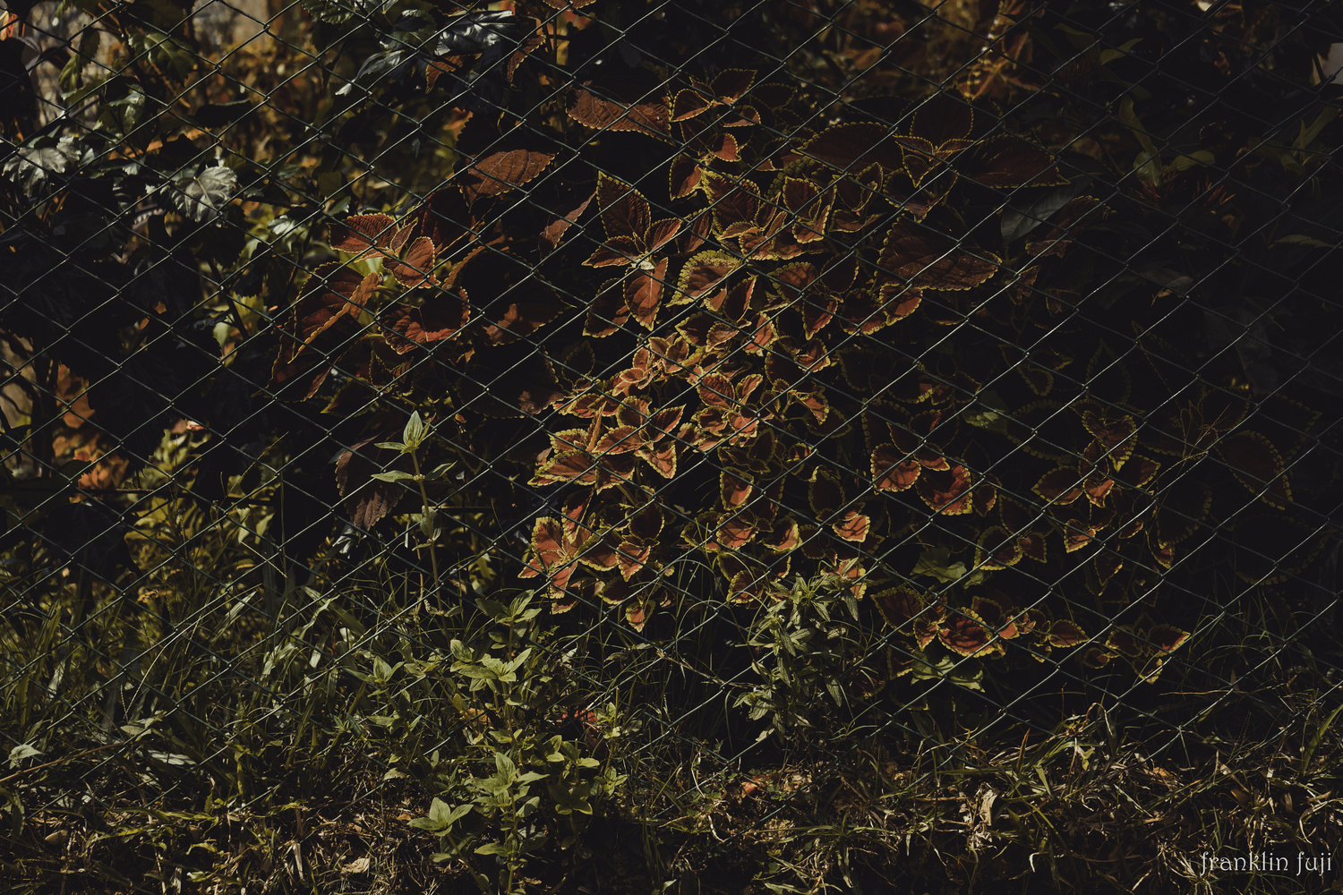 The fences we built by Franklin Biswas