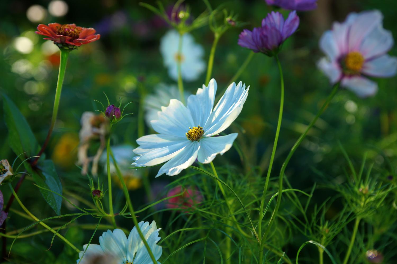 Spring splendour by Wojciech Grencer