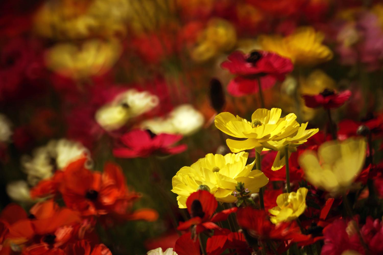Spring flowers by Wojciech Grencer