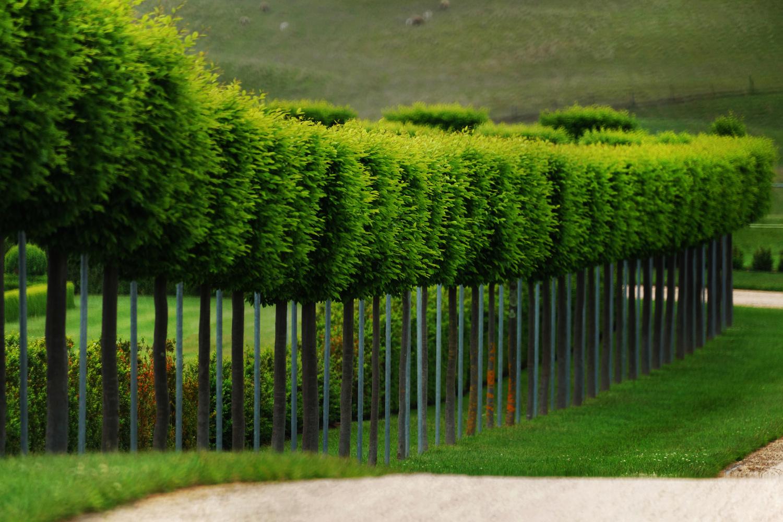 Mayfield Garden by Wojciech Grencer